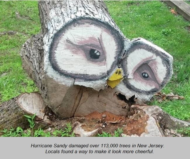 Tree after hurricane
